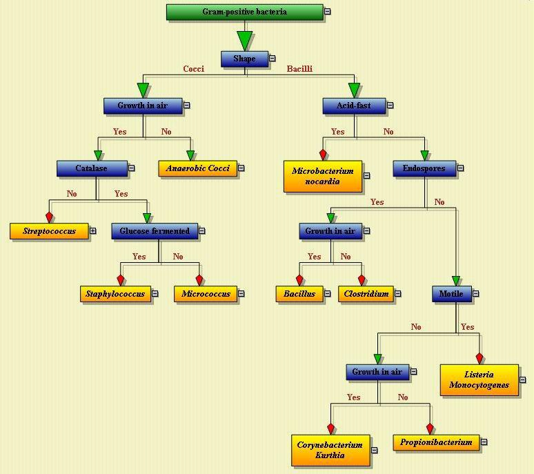 Bacteria Chart Mersnoforum