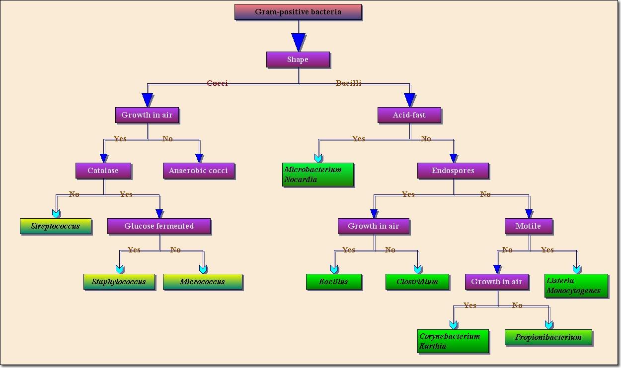 Professional flowchart activex control ocx control diagrams positive bacterials nvjuhfo Images